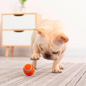 Jouet pour chien interactif et balle amusant Jouets pour chien et chat Doggy & Co
