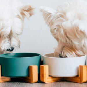Gamelle pour chien en céramique Accessoires Doggy & Co