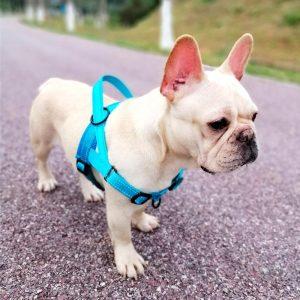 Harnais pour chien avec sangles ajustables Harnais pour chien Doggy & Co