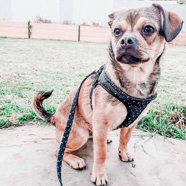 Harnais pour chien confortable Harnais pour chien Doggy & Co 3