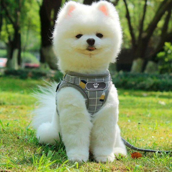 Harnais petit chien Harnais pour chien Doggy & Co 7