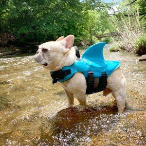 Gilet de sauvetage Requin pour Chien Harnais pour chien Doggy & Co 3