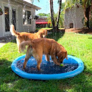 Jeu de jets d'eau pour chien Jouets pour chien et chat Doggy & Co