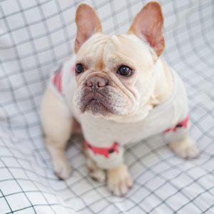 Pull pour chien design et de qualité Chiens Doggy & Co