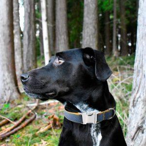 Collier pour chien Jean Brut - Doggy & Co