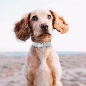 Collier pour chien Jean Clair - Doggy & Co