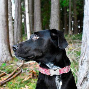 Collier pour chien Lolita - Doggy & Co