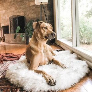 Coussin de luxe pour chien | Doggy Bed Luxury - Doggy & Co