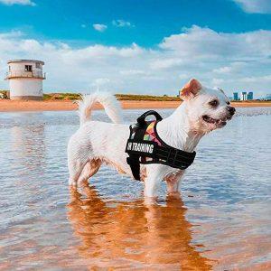 Harnais personnalisable pour chien - Doggy & Co