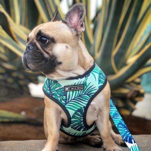 Harnais pour chien Tropical - Doggy & Co
