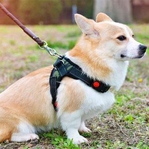 Harnais pour chien en nylon. Harnais pour chien Doggy & Co