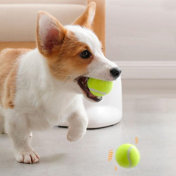 Lanceur de Balle pour chien Jouets pour chien et chat Doggy & Co 7